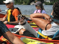 Dog at PaddlePower